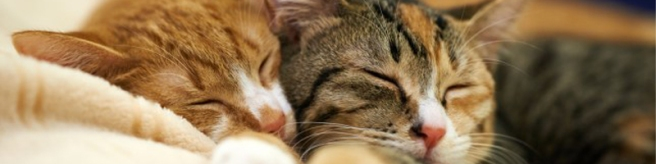 purr why cats purr mog and dog squad cat sitter didsbury